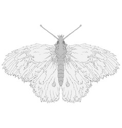 Fuzzy butterfly vector