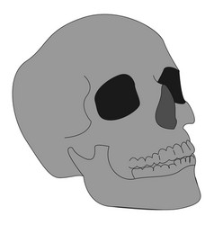 human skull on white background vector image