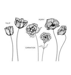 set tulip carnation poppy flower and leaf hand vector image