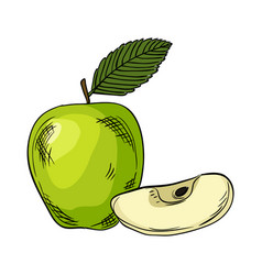 Watercolor eco frut line painted green apple vector