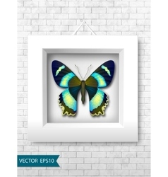 butterfly in a white frame on a brick wall vector image vector image