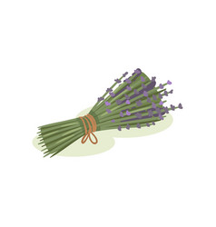 flowers of lavender bundle of medical plants tied vector image