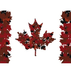 maple leafs vector image