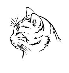 sleeping cat contour head vector image