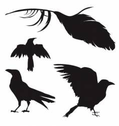 crows and ravens vector image vector image