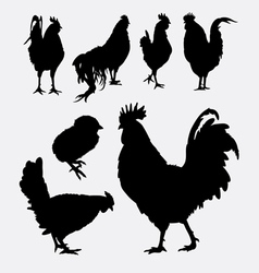 Rooster cock hen chicken silhouette 4 vector image