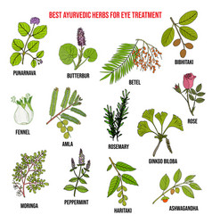 Ayurvedic herbs for eye treatment natural vector