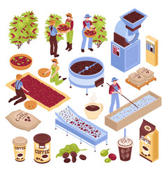 Coffee production elements set vector