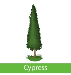 Cypress cartoon icon vector