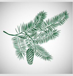 hand drawn pine tree branch vector image