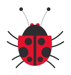 Lady bug icon vector