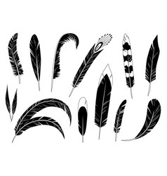 realistic detailed feathers set hand drawn vector image