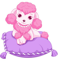 Cute mini poodle vector