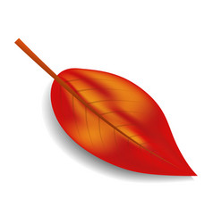 red autumn leaf icon realistic style vector image