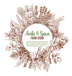 Spices and herbs sketch poster vector