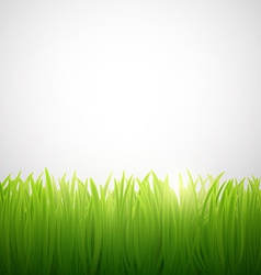 natural background of grass on white background vector image