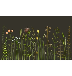 Wild Field Flowers and Grass on Black vector image