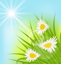 Summer nature background with daisy grass blue sky vector image