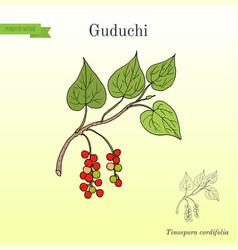Guduchi tinospora cordifolia ayurvedic medicinal vector