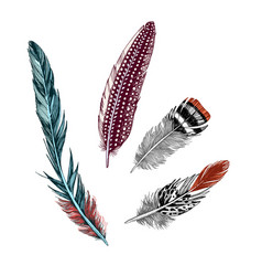 hand drawn colorful feathers on white background vector image