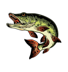 Pike fish colorful vintage concept vector