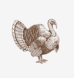 turkey hand drawn in engraving or vector image