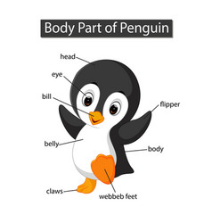 Diagram showing body part penguin vector