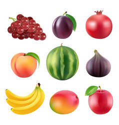 realistic of various fruits vector image