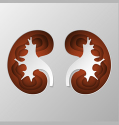 The brown silhouette of the kidney is carved on vector