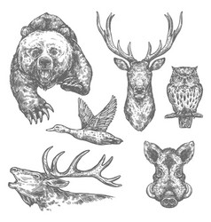 Wild hunting animals and birds sketches vector
