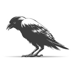 hand drawn crow vector image