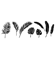 palm leaves silhouette set background vector image