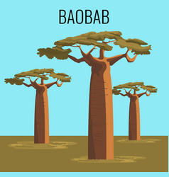 African baobab tree icon emblem vector