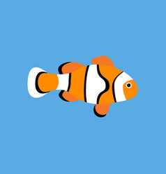 Amphiprion clown fish vector