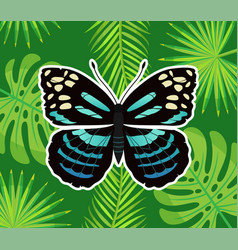 butterfly blue color palm leaves and branches vector image