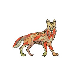 Coyote Side Isolated Drawing vector image