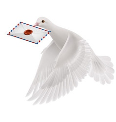 Dove white vector
