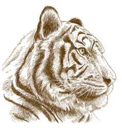 Engraving tiger head vector