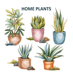 home plant 01 vector image