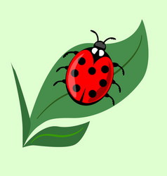 cute ladybug on green leaf isolated onlight green vector image
