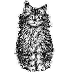 Hand drawing a sitting fluffy kitten vector