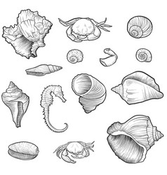 Hand drawn seashells vector
