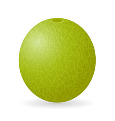 Melon isolated vector