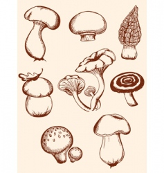 Set vintage forest mushrooms vector