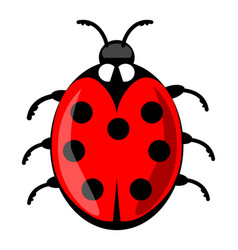 cute ladybug cartoon isolated on white background vector image vector image