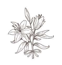 hand drawn lily bouquet vector image