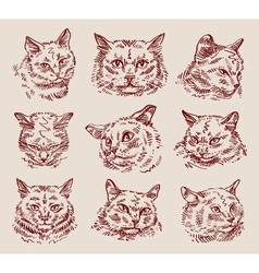 Hand drawn sketch set cats vector