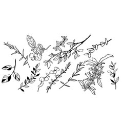 Set tiny greenery and foliage leaves vector