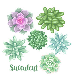 set of succulents echeveria jade plant and vector image vector image