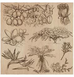 Flowers - an hand drawn pack line art vector